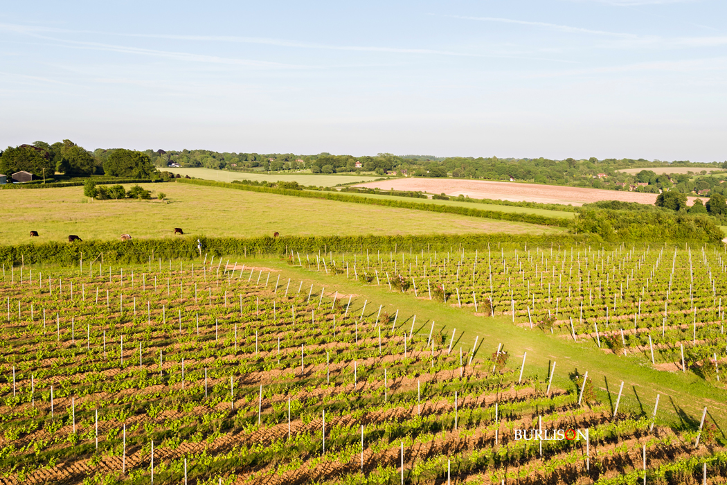 Hattingley Valley Vineyard